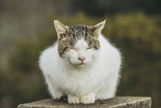 カット 野良猫 耳