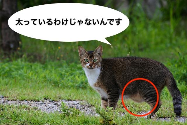 の たるみ 猫 お腹 の 【猫のお腹のたるみの理由】たるんでいる理由はルーズスキン