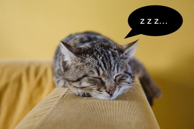 エコー 猫のいびき 【獣医師が解説】猫のいびきに潜む危険とは|いびきの原因と対処法|ねこのきもちWEB MAGAZINE