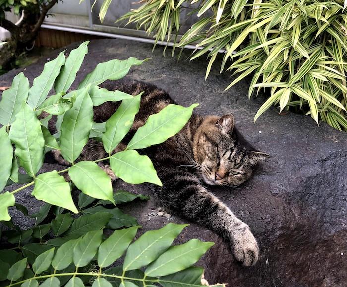 日陰の岩で休む猫