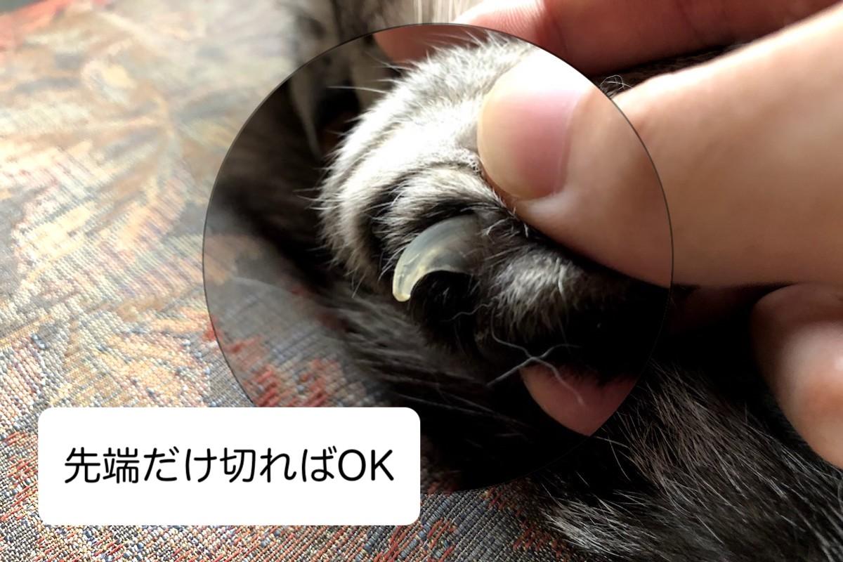 猫の爪切りは先端だけ切ればOK