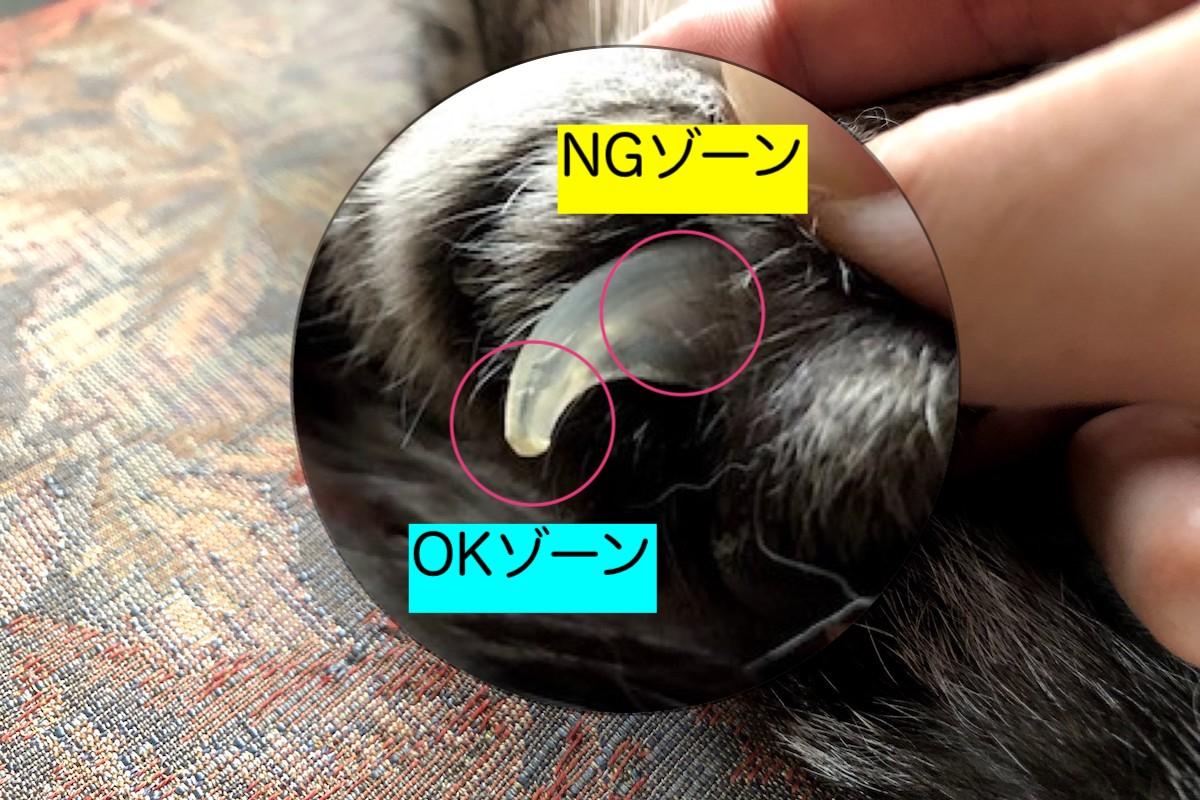 猫の爪切りはクイックを切ってはいけない