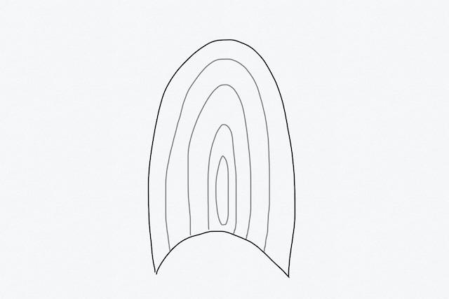 猫の爪の断面図