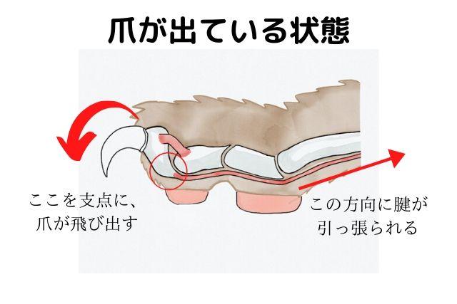 爪が出ている状態の図