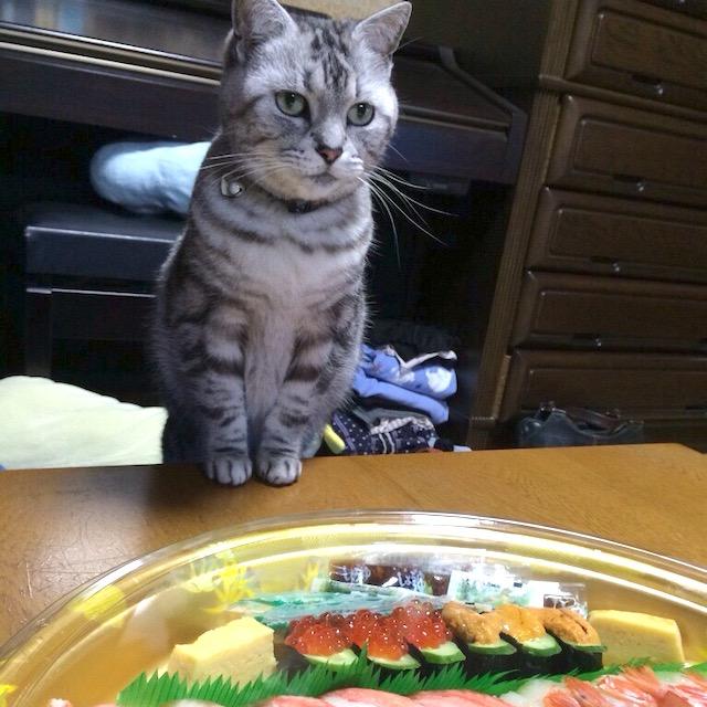 お寿司を欲しがる猫ミーちゃん