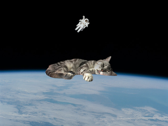 宇宙猫。地球の上で寝る猫