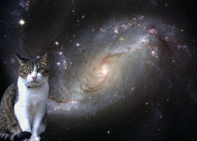 宇宙猫。銀河を眺める猫