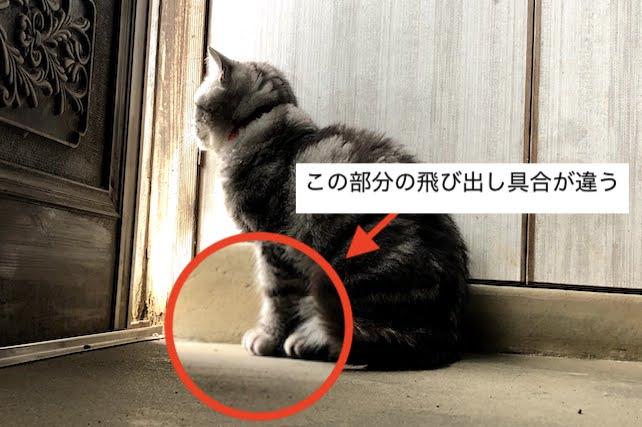 ミーちゃんの前足の大きさ