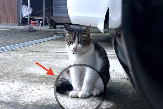 くーちゃんの前足の大きさ