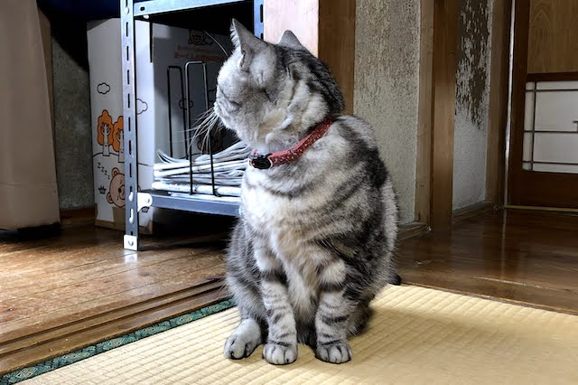怪我をした猫の座り方